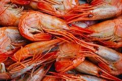 Camarão vermelho, close up delicioso, fervido Imagens de Stock