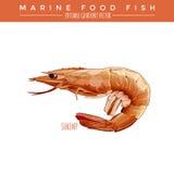 Camarón cocinado Marine Food Fish stock de ilustración