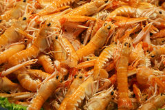 Camarón - mariscos Imagen de archivo libre de regalías