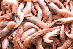 Camarões congelados Imagens de Stock