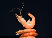 Camarões cozinhados, camarões Fotos de Stock Royalty Free