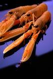 Camarões crus Fotos de Stock