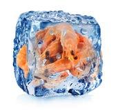 Camarões no cubo de gelo Imagens de Stock Royalty Free