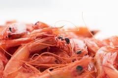 Camarões secos Fotografia de Stock