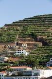 Camara de Lobos - aldeia piscatória tradicional, situada cinco quilômetros de Funchal em Madeira Fotos de Stock Royalty Free