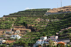 Camara de Lobos - aldeia piscatória tradicional, situada cinco quilômetros de Funchal em Madeira Fotografia de Stock