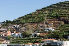 Camara de Lobos - village de pêche traditionnel, situé cinq kilomètres de Funchal sur la Madère Photographie stock libre de droits