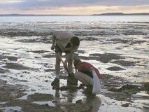 Camaradas de escavação Foto de Stock