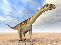 Camarasaurus del dinosaurio Imagenes de archivo