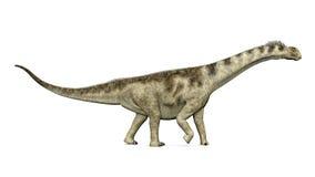 Camarasaurus del dinosauro Immagine Stock Libera da Diritti