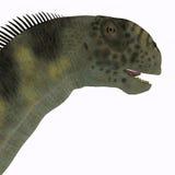 Camarasaurus Head Stock Image