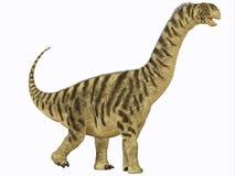 Camarasaurus Juvenile. Camarasaurus was a sauropod dinosaur that lived in North America in the Jurassic Age Stock Images