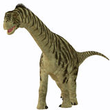 Camarasaurus Juvenile on White. Camarasaurus was a sauropod herbivore dinosaur that lived in the Jurassic Era of North America Stock Image