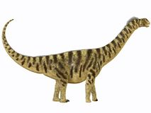 Camarasaurus Profile Stock Photos