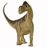 Camarasaurus on White Royalty Free Stock Images