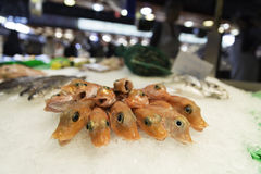Camarões crus frescos na exposição do gelo esmagado na loja da loja do mercado de peixes Foto de Stock Royalty Free