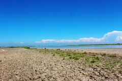 Camargue三角洲,法国 库存图片