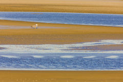 camargue Images stock