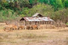 Camargue, animale, bestiame, Francia, agricoltura Fotografia Stock