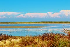 The Camargue Delta, France. The Camargue is a region in southern France. It is a natural parc formed by the Rhonedelta.  where animals such as flamingo's Stock Photos