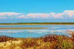 The Camargue Delta, France. Stock Photos