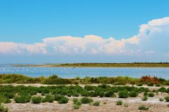 The Camargue Delta, France. The Camargue is a region in southern France. It is a natural parc formed by the Rhonedelta.  where animals such as flamingo's Royalty Free Stock Photo