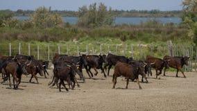 Camargue França Imagens de Stock Royalty Free
