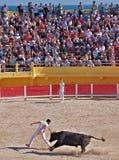 Camargue france bullfighting Stock Photo
