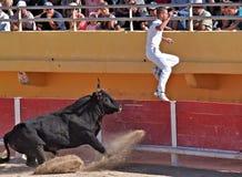 Camargue france bullfighting  Stock Images