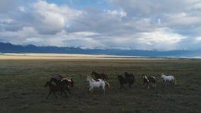 Camargue, Frankreich-des Tierpferdewilden weißen Viehbestandsonnenuntergangs laufende Zeitlupe des Reitercowboy-Berg 4k stock video