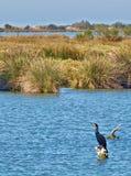 Camargue Frankrike fåglar på floden RhÃ'ne Royaltyfri Bild