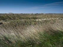 Free Camargue Landscape Stock Photos - 19838153