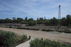 Camargue landscape at Aigues Mortes, France Stock Photos