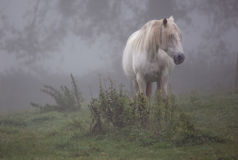 Camargue mare Stock Photos