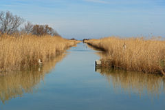 Camargue marsh France stock image