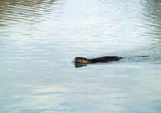 Camargue nationell djurlivreserv Arkivbilder