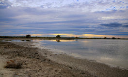 Camargue Natuurreservaat, de Rhône, Frankrijk Stock Afbeelding
