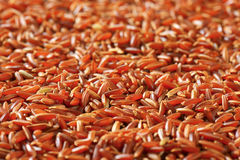Camargue red rice Stock Image