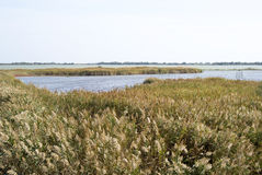Camargue wild landscape at autumn Royalty Free Stock Photography