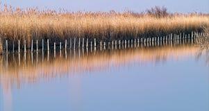 Camargue wild landscape at sundown Stock Photography