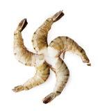 Camarones del tigre aislados en el fondo blanco Fotografía de archivo libre de regalías