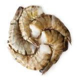 Camarones del tigre aislados en el fondo blanco Imágenes de archivo libres de regalías