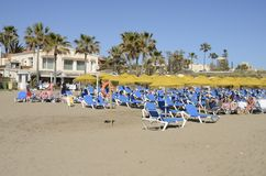 Camas azuis do sol Foto de Stock Royalty Free