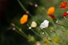 Camas de flor Foto de archivo