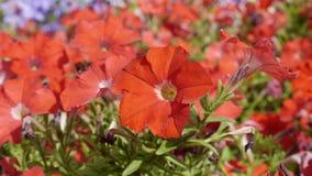 Camas de flor Imagen de archivo