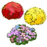 Camas de flor amarillas, rosadas y rojas aisladas Imágenes de archivo libres de regalías