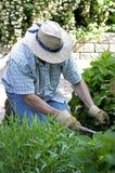 Camas de flor da remoção de ervas daninhas do jardineiro Fotografia de Stock