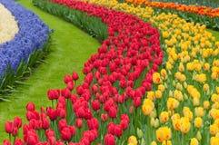Camas de flor de tulipanes multicolores fotografía de archivo