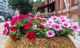 Camas de flor en la ciudad Fotos de archivo libres de regalías