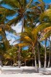 Camas de la playa bajo las palmeras en el Caribe Imagenes de archivo